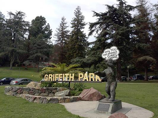 Griffith Park bear